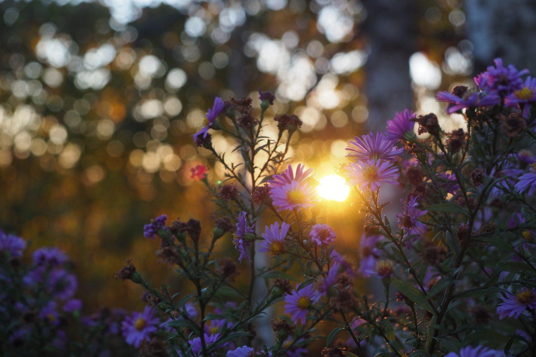 Ava f/4 | Säriaeg 1/250 sek | Tundlikkus ISO 640 Lilled liikusid tugevas tuules, seetõttu on pisut udused
